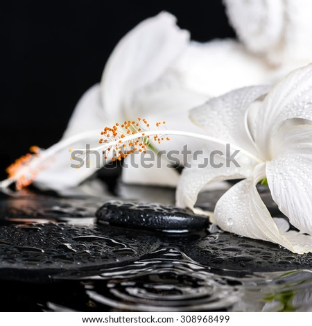 Beautiful spa concept of delicate white hibiscus, zen stones with drops and towels on ripple water, closeup  - stock photo