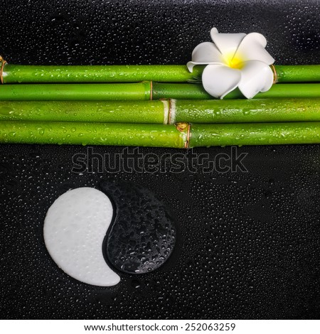 beautiful spa concept of frangipani flower, symbol Yin Yang and natural bamboo with leaves on zen basalt stones with drops  - stock photo