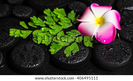 beautiful spa concept of green branch Adiantum fern, plumeria flower with drops on zen basalt stones in water, panorama  - stock photo