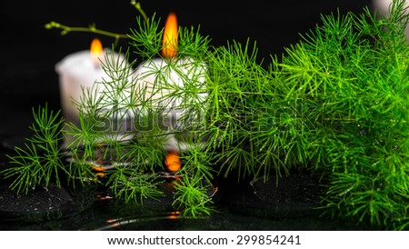 beautiful spa concept of green branch Asparagus with drops and candles on zen basalt stones in ripple reflection water, panorama  - stock photo