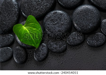 beautiful spa concept of green leaf Calla lily on zen basalt stones with drops