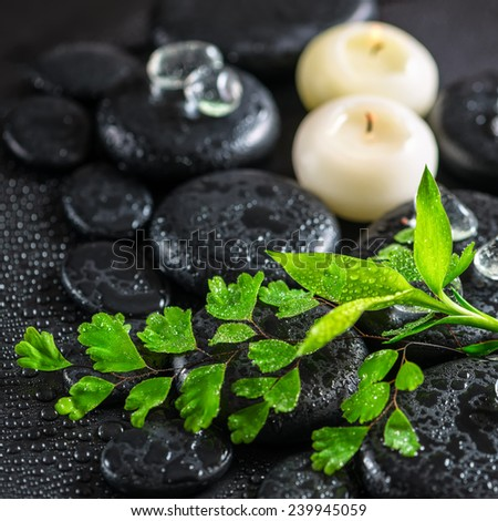 beautiful spa concept of green twig fern, bamboo,  ice and candles on zen basalt stones with dew, closeup - stock photo