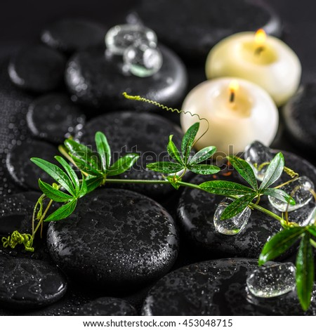 beautiful spa concept of green twig passionflower with tendril, ice and candles on zen basalt stones with drops, close up - stock photo