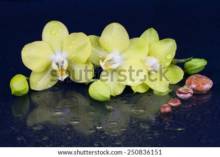 Beautiful spa concept of  yellow orchid (phalaenopsis) with stones and drops - stock photo