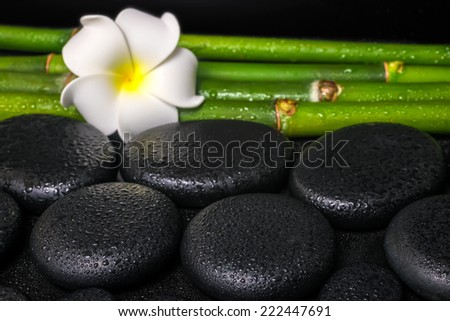 beautiful spa concept of zen basalt stones, white flower frangipani and natural bamboo with dew - stock photo