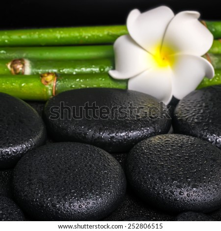 beautiful spa concept of zen basalt stones, white flower frangipani and natural bamboo with dew, closeup  - stock photo