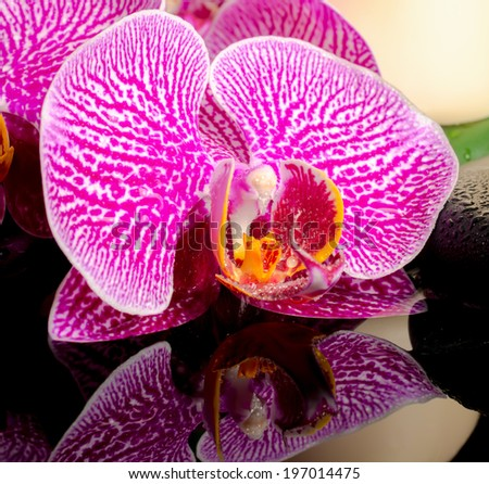 Beautiful spa concept of zen stones with drops, blooming twig of stripped violet orchid (phalaenopsis ) and candles on big green leaf with reflection on water, closeup - stock photo
