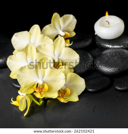beautiful spa setting of yellow orchid phalaenopsis and candle on black zen stones with drops, closeup - stock photo