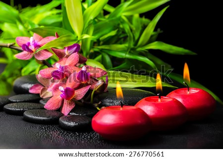 beautiful spa still life of blooming twig red orchid flower, phalaenopsis, bamboo with dew and candles on zen basalt stones, closeup - stock photo