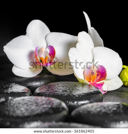 beautiful spa still life of blooming white and red orchid flower, phalaenopsis with dew on black zen stones, close up - stock photo