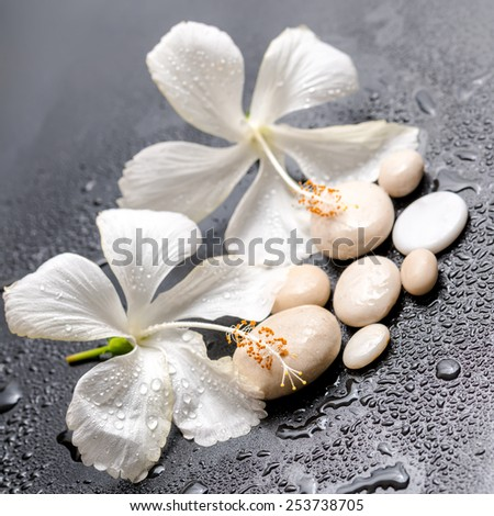 Beautiful spa still life of delicate white hibiscus and stones on black background with drops, closeup  - stock photo