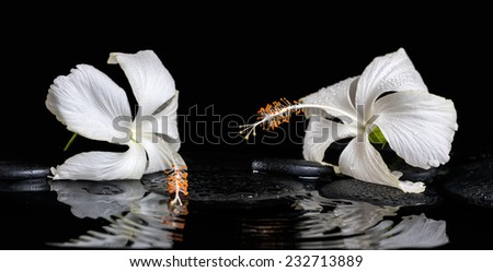 Beautiful spa still life of delicate white hibiscus, zen stones with drops on ripple water - stock photo