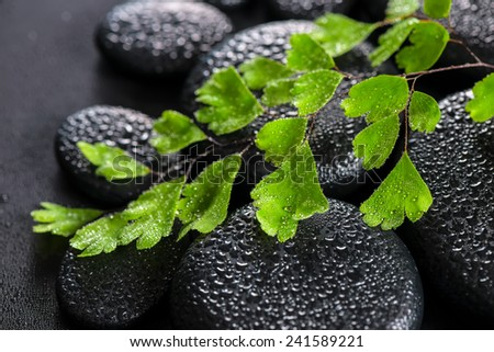 beautiful spa still life of green twig Adiantum fern on zen basalt stones with dew