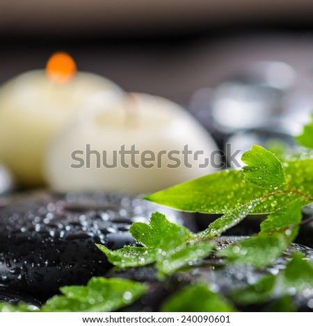 beautiful spa still life of green twig fern, bamboo,  ice and candles on zen basalt stones with dew, closeup - stock photo