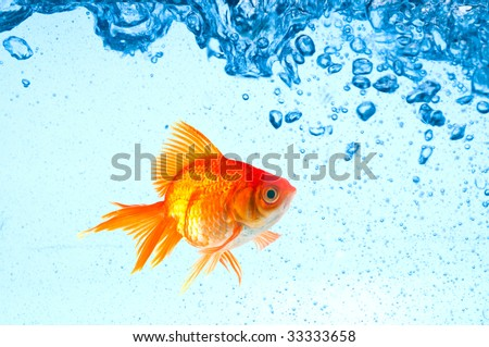 Beautiful splashes a clean water - stock photo