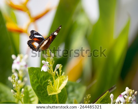 beautiful spotted purple butterfly on a flower