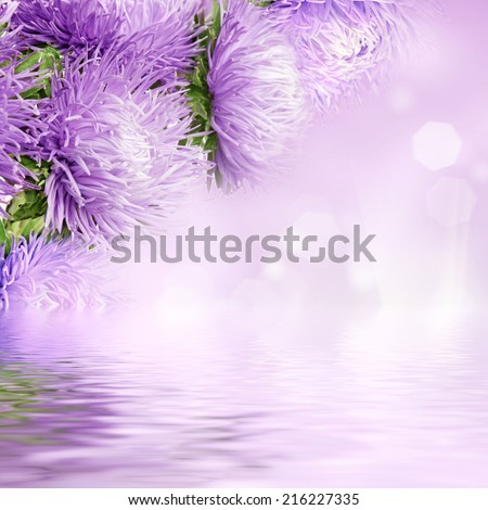 Beautiful spring aster flowers boquet on the colorful bokeh background - stock photo