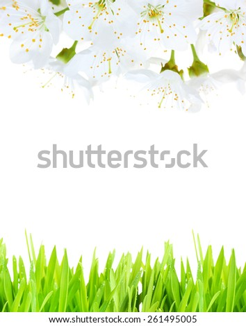 Beautiful spring background with blooming twigs and green grass - stock photo