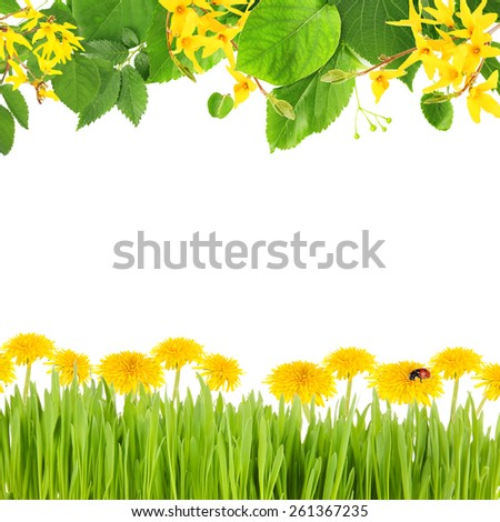 Beautiful spring background with blooming twigs, green grass and flowers - stock photo