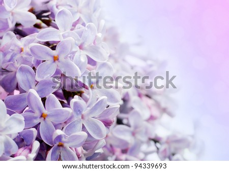 Beautiful spring background with lilac bouquet. - stock photo