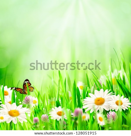Beautiful spring backgrounds with chamomile flowers - stock photo