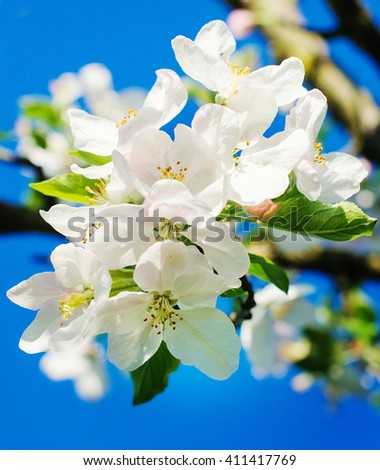Beautiful spring blooming tree, gentle white flowers - stock photo