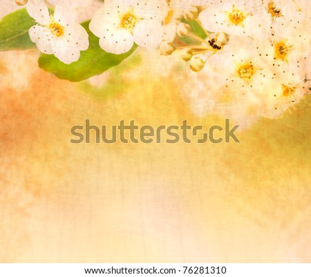 Beautiful spring blossom background with defocused lights - stock photo