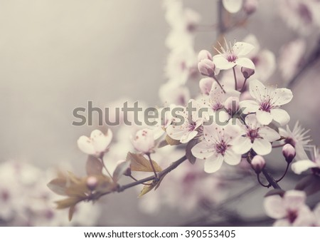 Beautiful spring blossom. Retro style image - stock photo