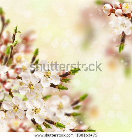 Beautiful spring blossoming apricot tree with bokeh.