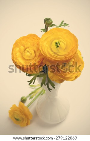 Beautiful spring bouquet of yellow ranunculus, persian buttercup flowers, in white vase on white background. Selective focus. Retro style toned.  - stock photo
