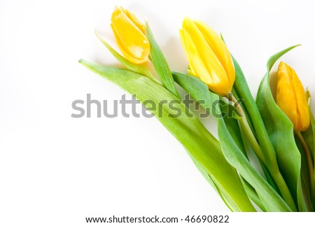 beautiful spring bouquet of yellow tulips