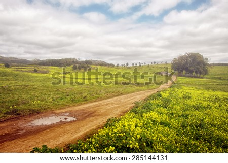 Beautiful Spring countryside landscape with yellow flowers and a dirt road - stock photo