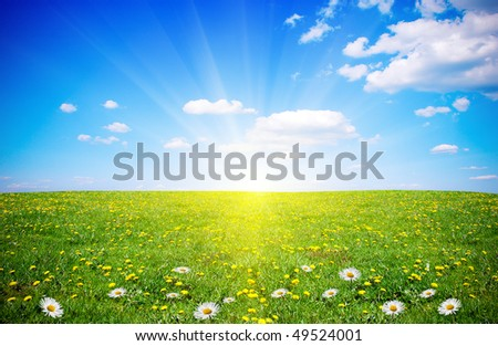 Beautiful spring field with flowers in sunlight - stock photo