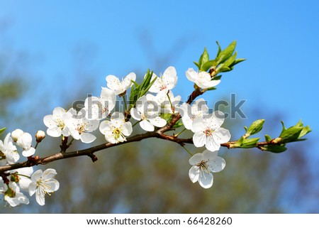 Beautiful spring flower - stock photo