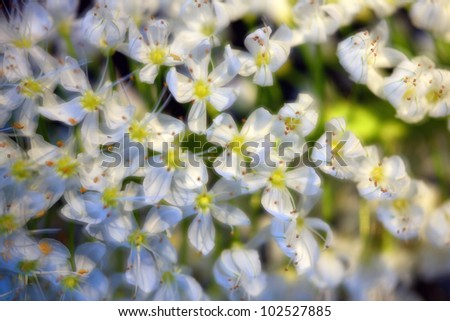 beautiful spring flower background closeup, soft and romantic