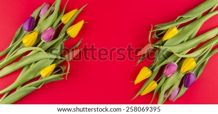 beautiful spring flowers - stock photo