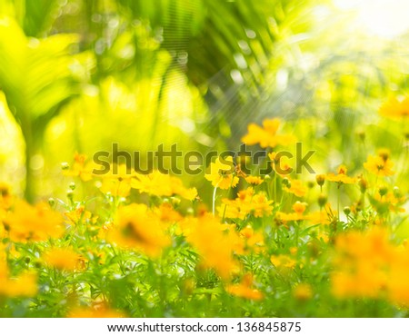 Beautiful spring flowers background - stock photo