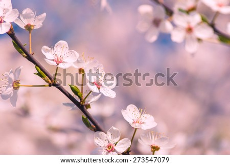Beautiful spring flowers background - stock photo