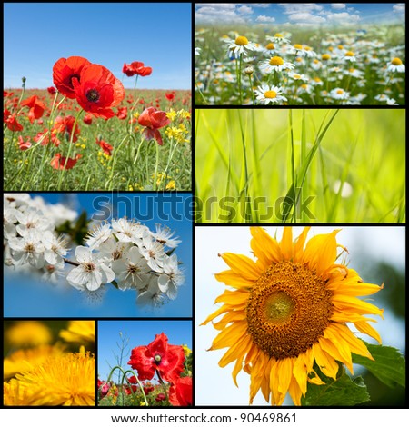 Beautiful spring flowers collection. - stock photo