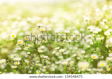 Beautiful spring flowers in a meadow - stock photo