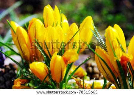 Beautiful spring flowers in the field - stock photo