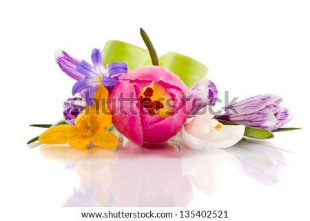 beautiful spring flowers on a white background - stock photo