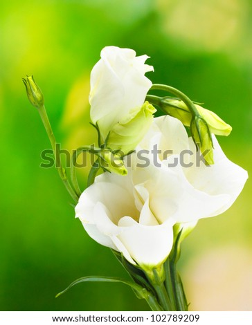 beautiful spring flowers on green background