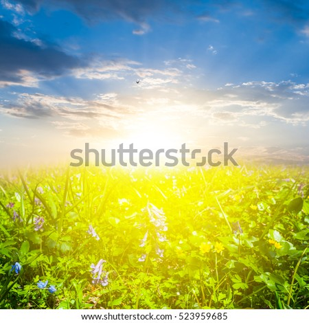 beautiful spring forest glade in a rays of sun