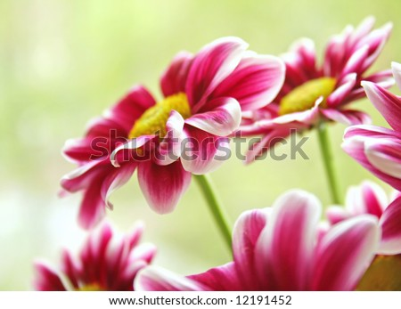 Beautiful spring garden flowers in sunshine - stock photo