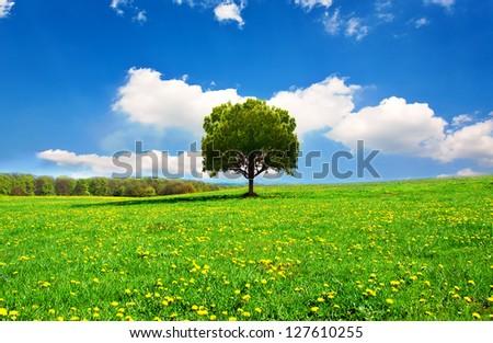 Beautiful spring landscape - stock photo