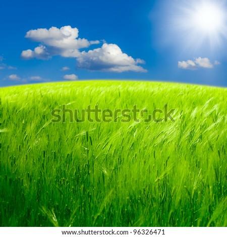 Beautiful spring landscape: Green field of rye - stock photo