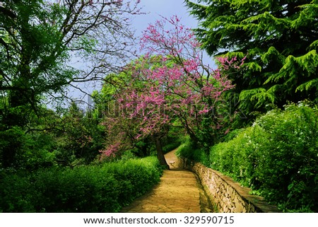 Beautiful spring landscape - Vorontsov park with lush greenery and flowering trees, and paved walkway stretching into the distance, Alupka, Crimea - stock photo