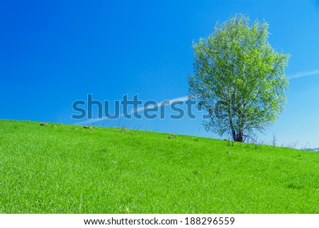 beautiful spring landscape with a lonely tree in the field - stock photo
