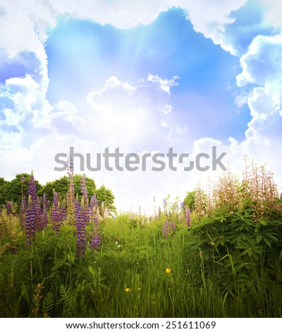 Beautiful spring landscape  with flowers  - stock photo